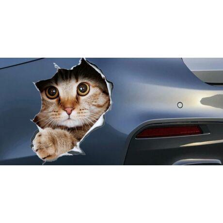 Autóból kimászó cica matrica